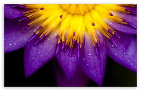 purple-and-yellow-image.jpe